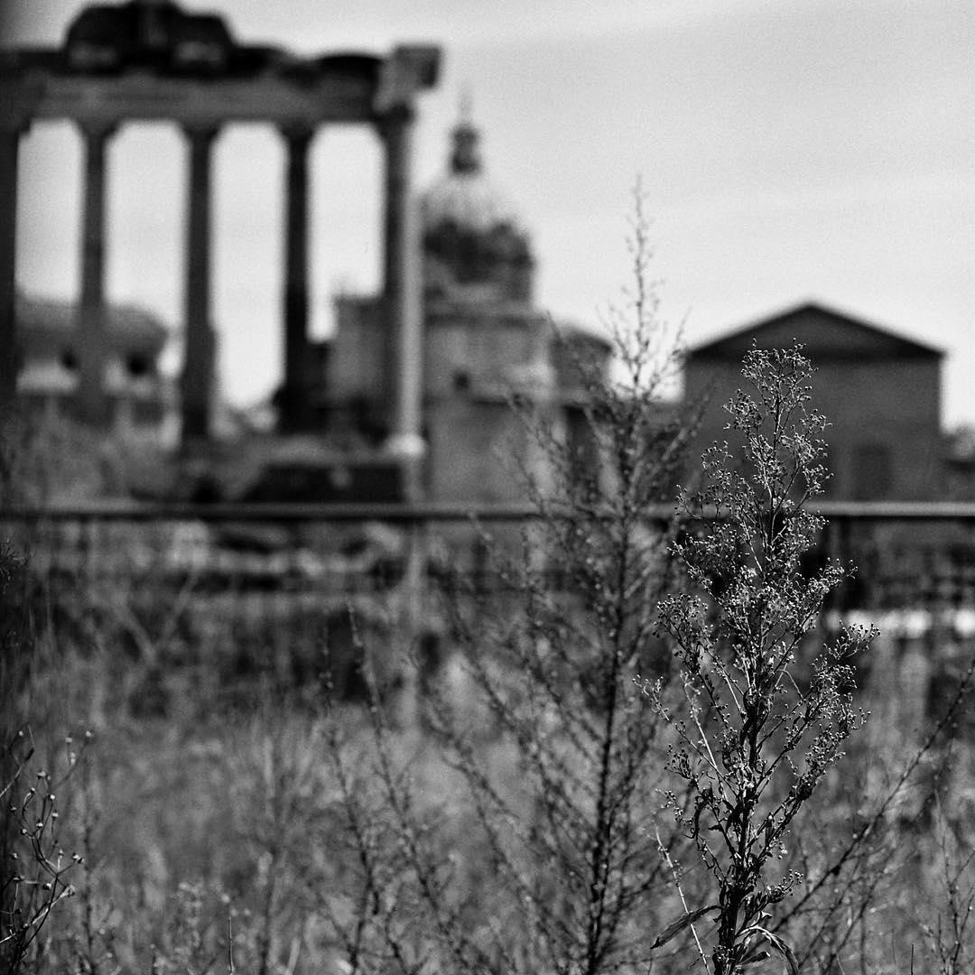 #whatremains (hu)#manvsnature #fororomano #architecture #rome #roma #italy #italia #streetphotography #blackandwhite #shootfilm #hasselblad #120film from July w/ #spaldingmfa #worldphotoday