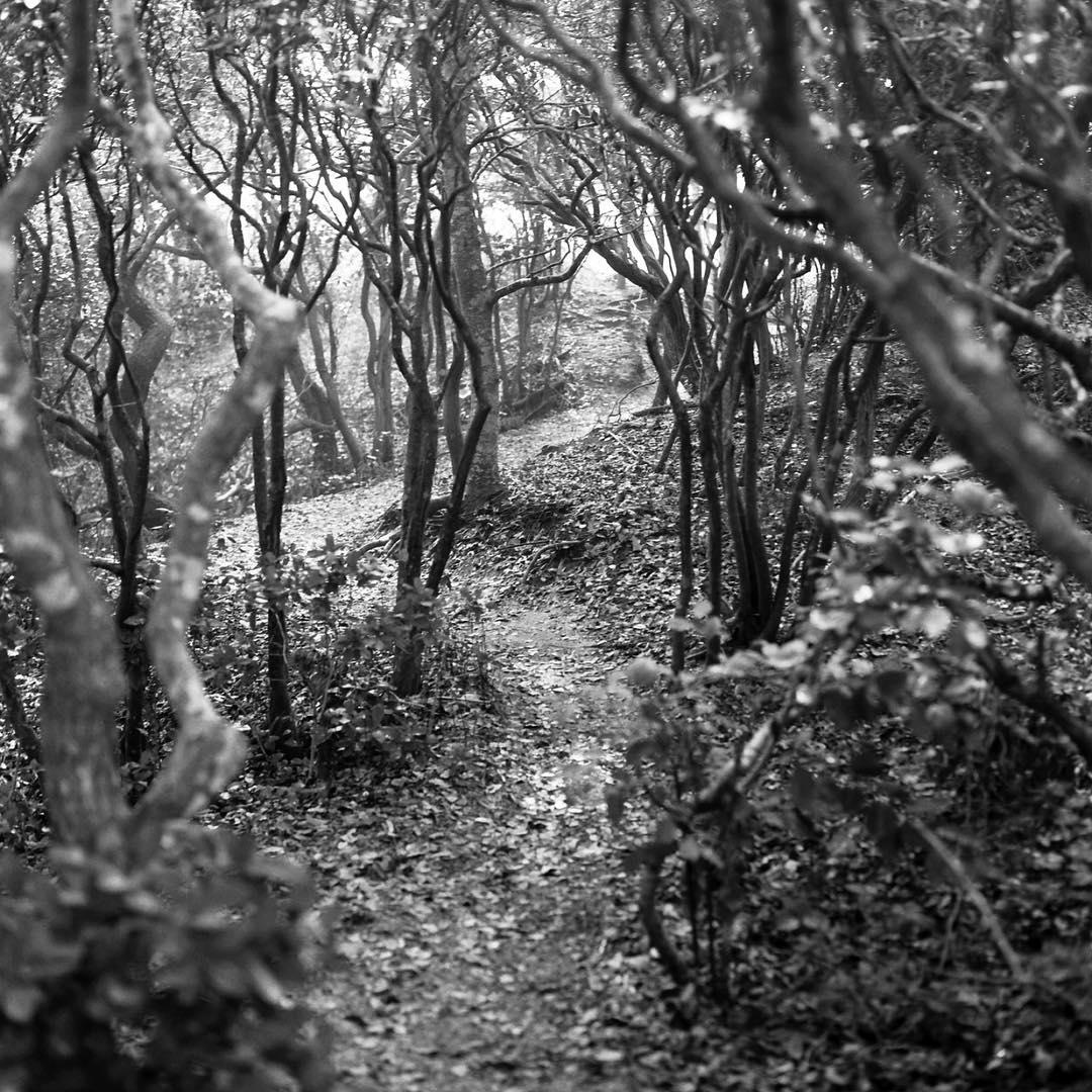 #misty #morning in the #fireisland #meatrack #fireislandpines #cherrygrove #shootfilm #120film #blackandwhite #hasselblad #intothewoods #photography #gay #gayparadise