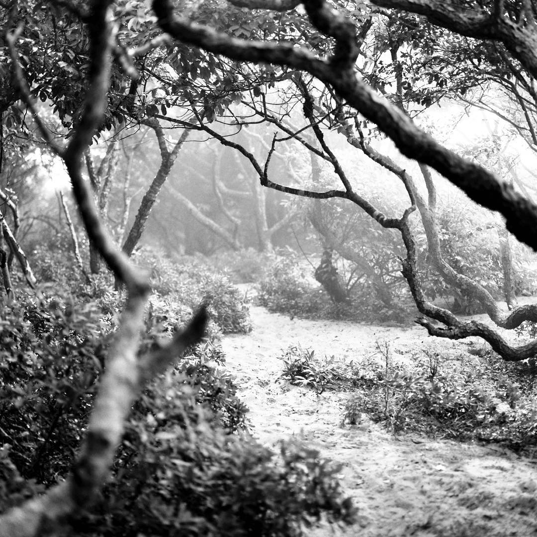 And another #misty #morning #meatrack in #fireisland #newyork #fireislandpines #cherrygrove #gayparadise #gaybeach #gay #blackandwhite #photography #120film #shootfilm #longisland #trees #magicalforest #enchantedforest