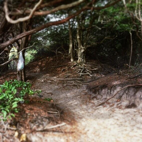 #meatrack w/ #trashbags #fireisland #cherrygrove #fireislandpines #gaybeach #gayparadise #gay #colorfilm #shootrealfilm #120film #hasselblad #photographer #intothewoods #cherrysteppers #magicalworld